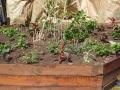 Les Jardins de Louvois
